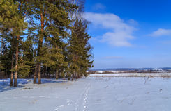Field and forest winter day. Russian landscape Royalty Free Stock Image
