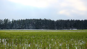 Field and forest winter landscape. Landscape of cropland with a fir forest in the background in winter season. A deerstand at the edge of the forest for watching Stock Photography