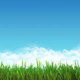 Field frame of green grass and blue sky. Stock Photography