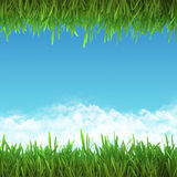 Field frame of green grass and sky. Stock Image