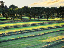 Field with fresh cut grass Stock Photo