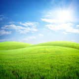 Field of fresh grass. On a background of blue sky Stock Image