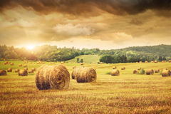 Field of freshly bales of hay. Field of freshly cut bales of hay with beautiful sunset Royalty Free Stock Images