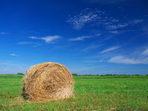 Field of freshly bales of hay with blue sky Royalty Free Stock Images