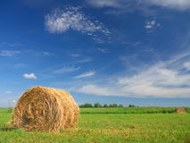 Field of freshly bales of hay with blue sky Stock Photos