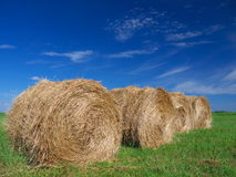 Field of freshly bales of hay with blue sky Royalty Free Stock Photography