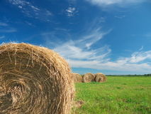Field of freshly bales of hay with blue sky Stock Image