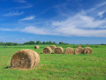 Field of freshly bales of hay with blue sky Stock Photography