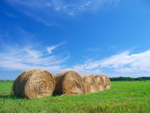 Field of freshly bales of hay with blue sky Stock Photo