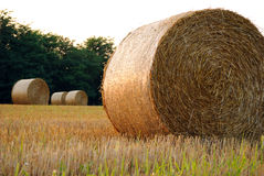 Field of freshly bales of hay Stock Images