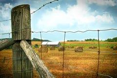 Field of freshly cut bales of hay Royalty Free Stock Image