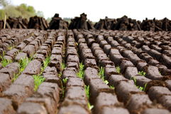 A Field Of Freshly Cut Turf Royalty Free Stock Photos