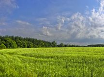 Field of freshness. Green field under blue sky in summer Royalty Free Stock Photos