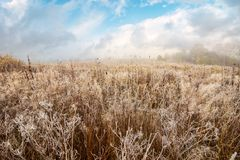 Field with frozen dry grass. Distant forest in fog under the gorgeous sky stock images