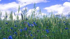 Field full of flowers stock image