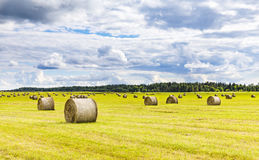Field full of hay balls at bright summer day. Field full of hundreds large round hay balls at bright summer day Royalty Free Stock Photo