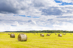 Field full of hay balls at bright summer day. Field full of large hay balls at bright summer day Royalty Free Stock Photography
