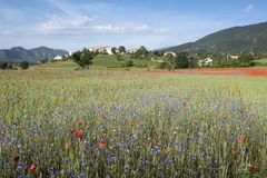 Field full of red poppies and other summer flowers near old village on hill in french provence Stock Photos