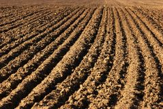 Field furrows Stock Photo