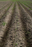 Field, the furrows. The ploughed field Royalty Free Stock Photography