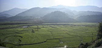 Field. When go to MuongCha, at the sunshine Royalty Free Stock Photos