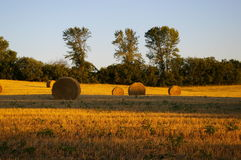 Field of Gold. Hay Field with Round Bales, shot in late day golden sun Stock Photo