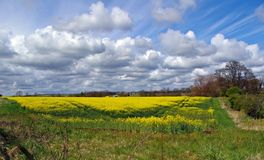 Field of Gold Stock Images