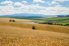 Field of golden colored barley in rural landscape, Slovakia. Field of golden colored barley with clouds, lake, mountain Kralova hola and fields in background stock images