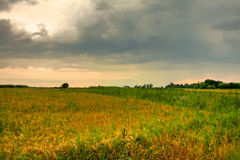 Field with golden and green grass under stunning sunset sky Stock Photography