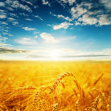 Field with golden harvest and sunset Stock Photo