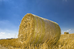 Field with golden hay bale. With blue sky Stock Images