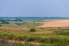 Field of golden wheat. Summer rural landscape royalty free stock photo