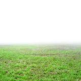 field gräs Arkivfoton