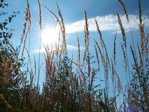 field gräs Royaltyfri Fotografi