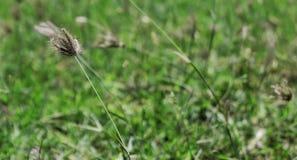 field gräs Fotografering för Bildbyråer