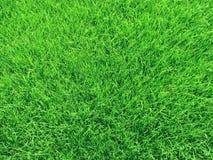 field gräs Arkivbild