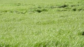 field gräs stock video