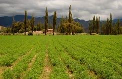 field grön mountainscape arkivbilder
