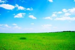 field gröna trees Arkivbilder