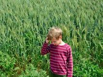 field grönt vete Royaltyfria Foton