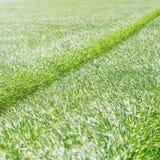 field grönt vete Ung bakgrund för vetefält Royaltyfri Foto