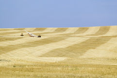 Field of grain alongside Stock Images