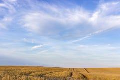 Field of grain Stock Photo