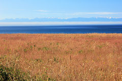 Field of grain in the San Juan Islands. Royalty Free Stock Photography
