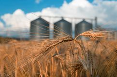 Field with grain silos for agriculture. Farm, wheat field with grain silos for agriculture royalty free stock photography