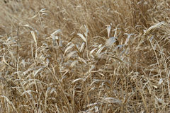 Field grass Stock Photo
