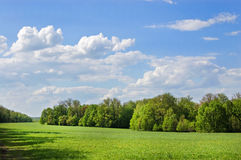 Field of grass. In Yasnaya Polyana, Russia and wood in the distance stock image