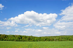 Field of grass. In Yasnaya Polyana, Russia and wood in the distance royalty free stock photo