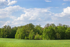 Field of grass. In Yasnaya Polyana, Russia and wood in the distance royalty free stock photography