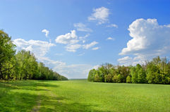 Field of grass. In Yasnaya Polyana, Russia and wood in the distance royalty free stock images
